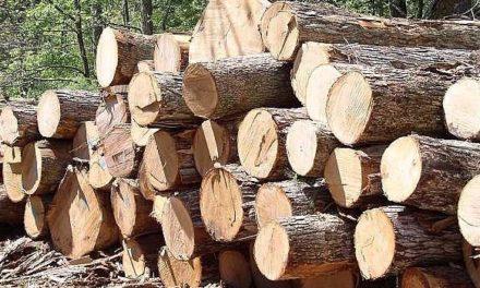 Unilin Group neemt industriële houtzagerij in Roemenië over